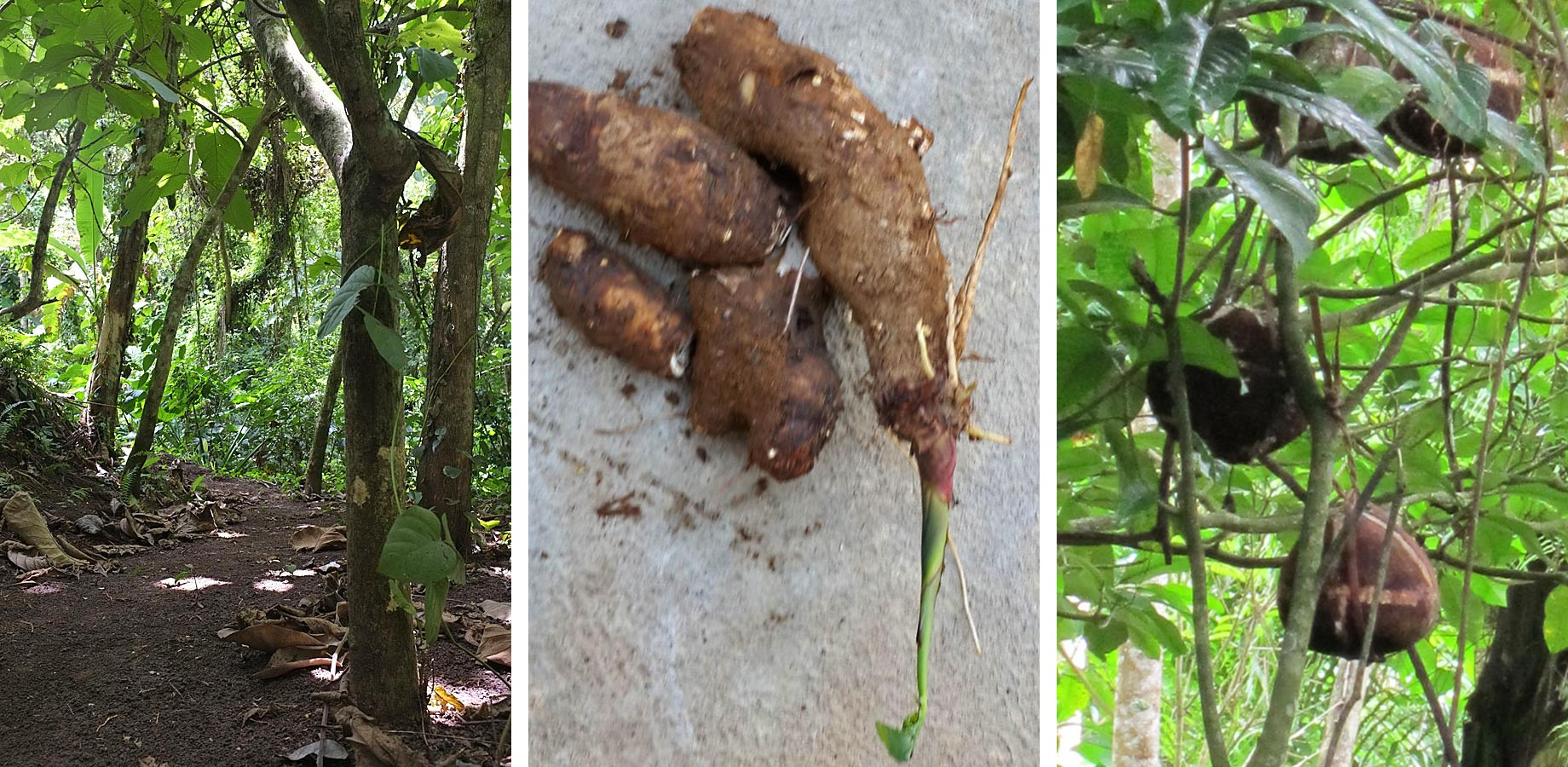 foods that save the forest bali silent retreat