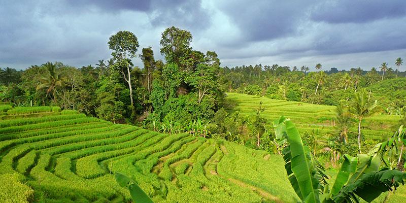 Bali Silent Retreat Ricefields