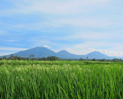 Bali Silent Retreat - Mountain range and rice terrace