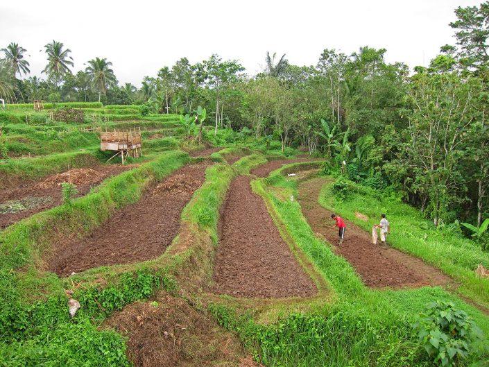 Vegetable beds on river side preparing the soil