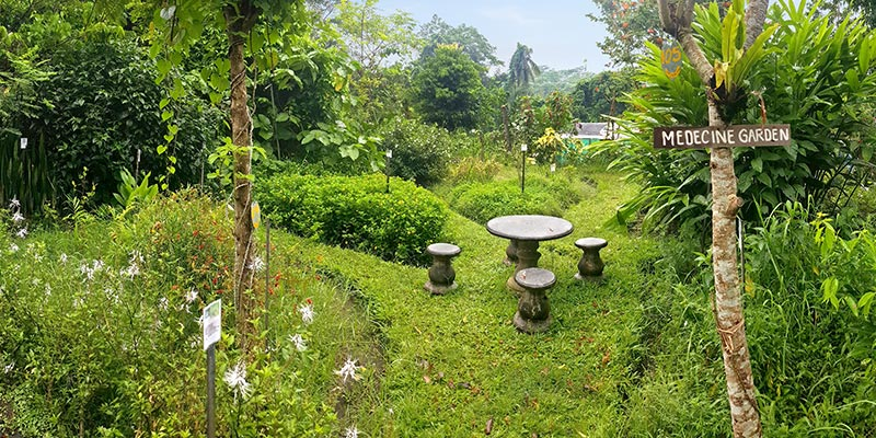 Bali Silent Retreat - Medicine Garden