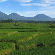 Bali Silent Retreat Mount Batukaru Rice terrace