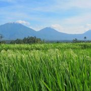 Bali Silent Retreat Ricefields overlooking Mount Batukaru