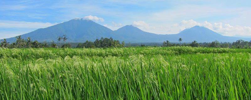 Bali Silent Retreat Ricefields overlooking Mount Batukaru