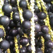 Acai berry 1st harvest