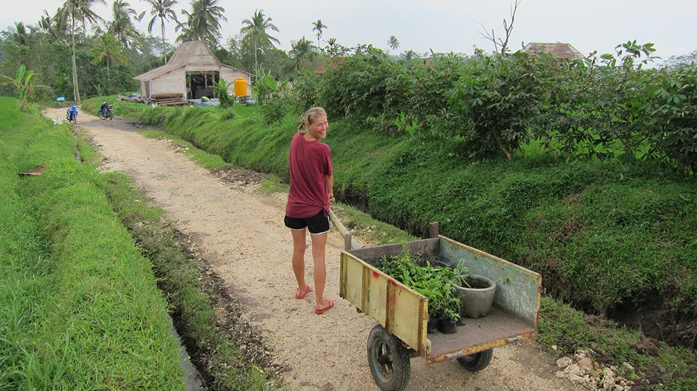 Hauling plants from the nursery
