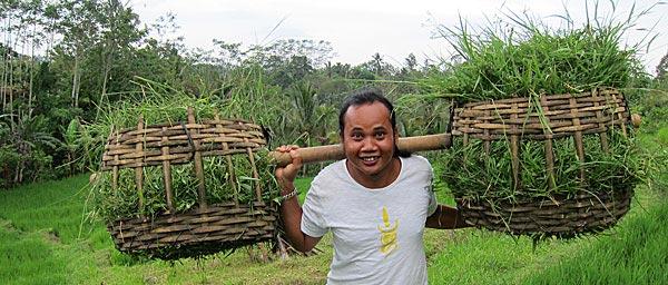 Sangtu carry compost