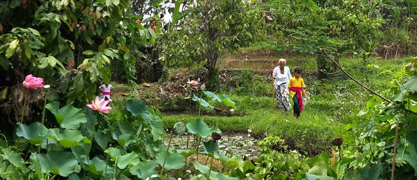 Helping Grandma through the lotus ponds after ceremony