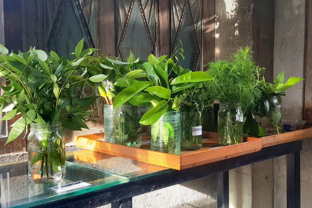 Fresh Medicine Herbs for infused tea.