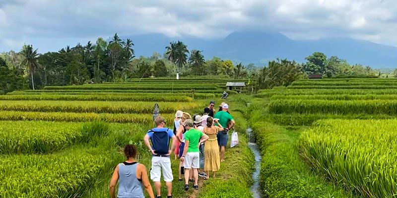 Sustainable Living - Ricefield